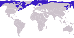 Ringed seal worldwide range. Credit: Mirko Thiessen