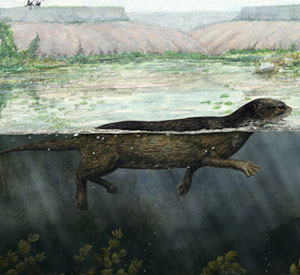 Puijila darwini, a species that lived during the Miocene, was discovered in Nunavut in 2007, and is the missing link in understanding seal evolution. Credit: Katherine Harman / Scientific American