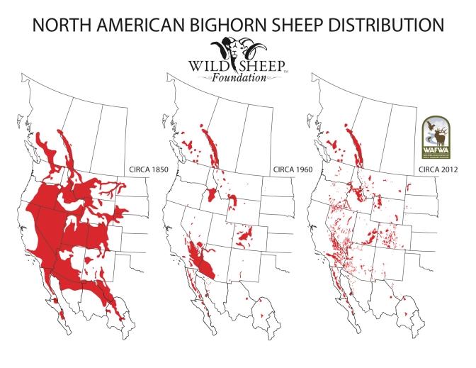 bighorn-sheep-historic-distribution